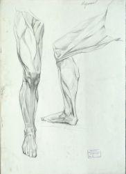 Учебный рисунок мышц ног